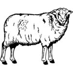 SHEEP002 Thumbnail