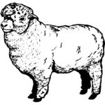 SHEEP004 Thumbnail